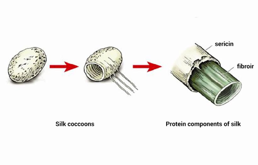 Silk Sericin